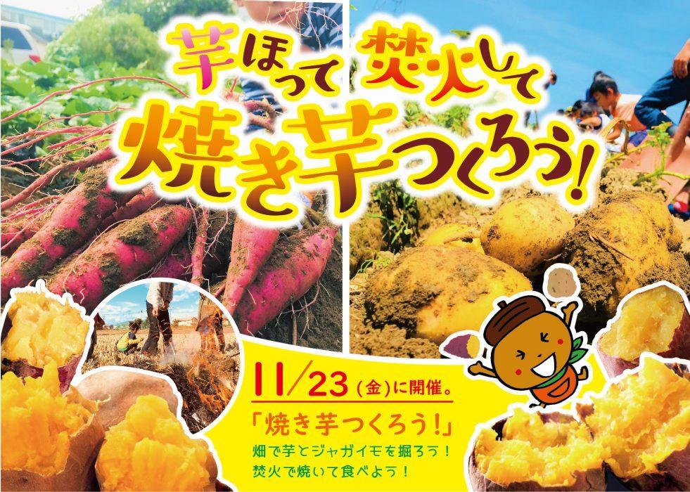 11月23日(金)イベント焼き芋!みかん狩り!11/23更新